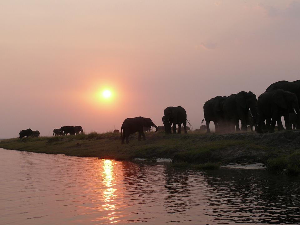 Préparation voyage au Botswana